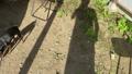 地面のスマホで写真を撮る男性本人のシルエット写真・画像素材 68142530
