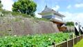 蓮の花と薩摩の御楼門の風景 68205451