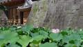 ハスの花が咲く頃の美しい御楼門の風景 68313723