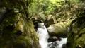 Mountain stream flowing between mossy rocks 68375393