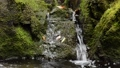 A small clear stream flowing between mossy rocks 68375396