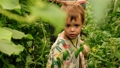 Boy among plants in garden 68408969
