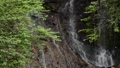 Green branch and white snake waterfall 68436877
