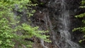 Green branch and white snake waterfall up 68436878