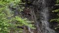 緑の枝と白蛇の滝のアップ 68436878