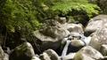 Mountain stream flowing between rocks under a green forest 68436880