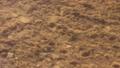 하천 물고기(피라미)의 움직임 68560745