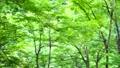 富山県黒部市_トロッコ電車の車窓から見た森林 68622383
