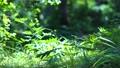 草葉の揺らぎ 68729190
