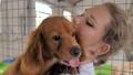 Close-up of female volunteer holds on hands dog in shelter. Shelter for animals concept 68962433