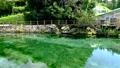 エメラルドグリーンに輝く丸池公園の川 69032813