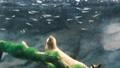 水流に逆らって泳ぐ川魚の幼魚 69032814