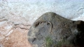 石の上で休むヤモリの赤ちゃん 69057982