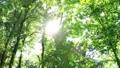 さわやかな森林 木漏れ日 太陽の光 69224842