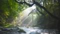菊池渓谷の光芒 69232983