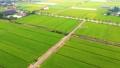台灣農村稻田 Asia Taiwan rice fields 69269089