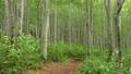초여름의 너도밤 나무 숲 69383572