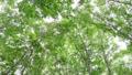 바람에 흔들리는 너도밤 나무 숲 69383573