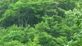 바람에 흔들리는 너도밤 나무 숲 69383604