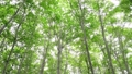 너도밤 나무 숲 바람에 흔들리는 69436153