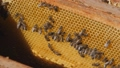 View of the opened hive body showing the frames populated by honey bees. Beekeeper working collect honey. Beekeeping concept. 69534628