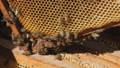 View of the opened hive body showing the frames populated by honey bees. Beekeeper working collect honey. Beekeeping concept. 69534630