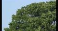 바람에 흔들리는 느티 나무 69577153