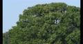 바람에 흔들리는 느티 나무 69577154