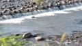 江合川の流れ 69699213