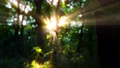 morning in a forest slow motion 69750720