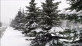 Snowfall in the park, snow covered fir trees and a path, dark daytime twilight. 69849815