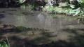 深本次哥丹遜池 70010904