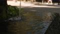 新大寺的御殿水 70010906