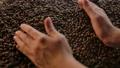 Pleasure of freshly roasted coffee beans. Human hands, dark grains, burlap 70126625
