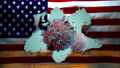 United States of America Flag being Ripped to reveal 3D model of Coronavirus CoVid19 70200343