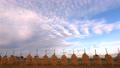 稲を天日乾燥する風景のタイムラプス 70228010