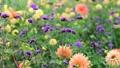美しい花畑とそよ風 70300420