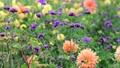 美しい花畑とそよ風 70300421