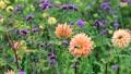 美しい花畑とそよ風 70300422