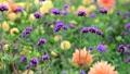 美しい花畑とそよ風 70300423