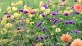 美しい花畑とそよ風 70300424