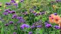 美しい花畑とそよ風 70300425