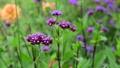 美しい花畑とそよ風 70300426