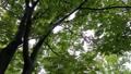 雨 公園の樹木 70416851