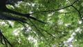 雨 公園の樹木 70416852
