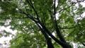 雨 公園の樹木 70416854