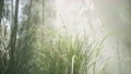 Grass flower field with soft sunlight for background. 70468932