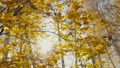 autumn forest with colorful trees 70629637
