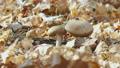 Brown boletus mushroom 70629641