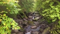 River with many small waterfalls in the forest. Stream running fast between large stones surrounded by trees. Steadicam slow motion shot 70816338
